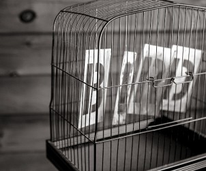 black-and-white-bird-birdcage-cage2